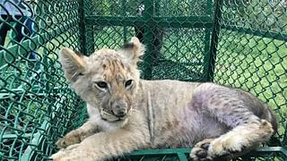 Crackdown helps raise the alarm over scale of animal trafficking