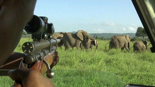 Milhares de animais selvagens apreendidos