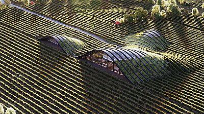 Shilda winery in Kakheti, Georgia