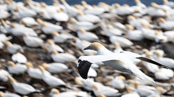 INTERPOL, doğal hayatı korumak için 109 ülkede operasyon düzenledi: 600 zanlı gözaltına alındı