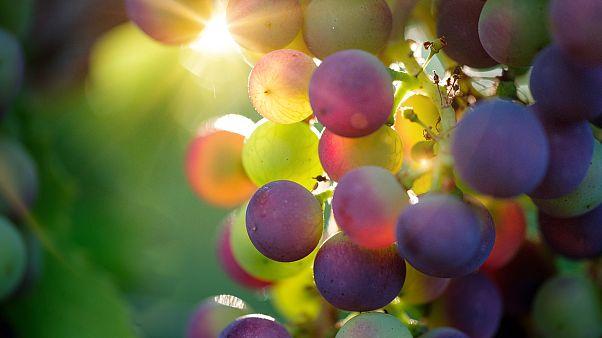 بيع عنقود من العنب في اليابان بـ 11000 دولار فقط لاغير