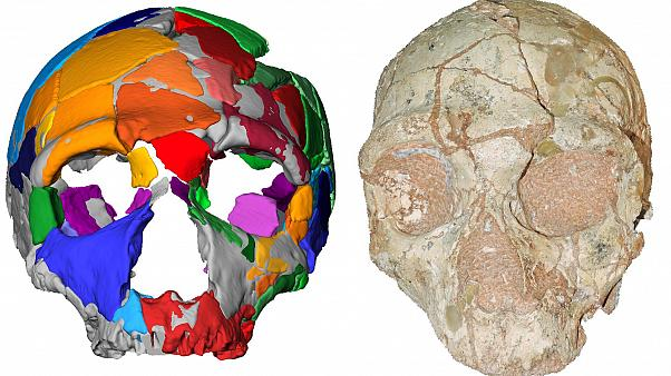 The Apidima 2 cranium and reconstruction show Neanderthal lineage