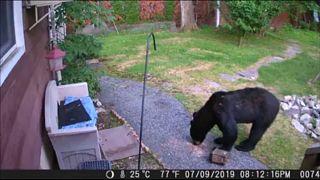 شاهد: كلب شجاع يطارد دباً غزا حديقة جيرانه في نيو جيرسي