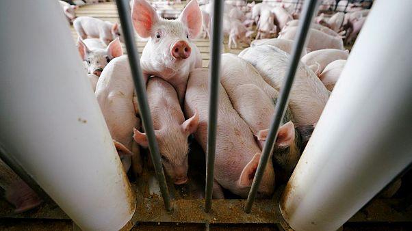 """Freiwilliges Tierwohl-Label: Innenministerium hat """"Bedenken gegen Gesetzentwurf"""""""