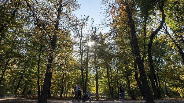 """Alig két nap alatt majdnem 10 ezren csatlakoztak a """"10 millió fa"""" mozgalomhoz"""
