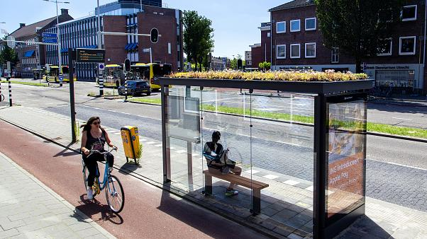 Getting from A to bee: Utrecht installs environmentally-friendly bus stops