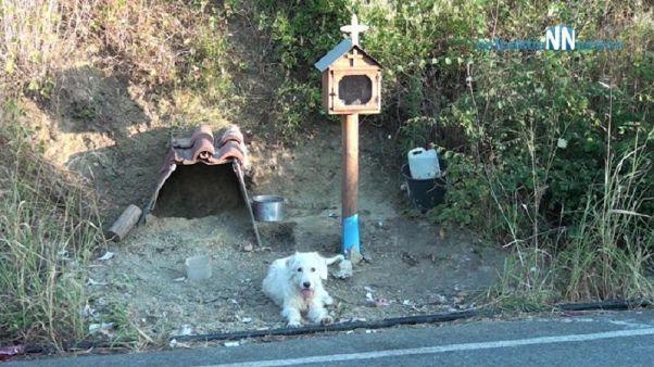 Σκύλος επί δύο χρόνια μένει στο σημείο που σκοτώθηκε το αφεντικό του