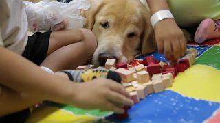 Juca, o cão brasileiro que muda a vida dos mais novos