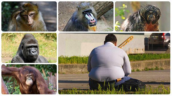 چرا انسان از دیگر گونههای جانوری چاقتر است؟ علم پاسخ میدهد