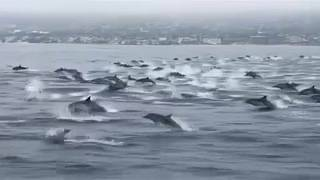 Száguldás delfinekkel