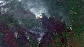 """""""Soviel CO2 wie Schweden in einem Jahr"""": Waldbrände in der Arktis sorgen für hohe Emissionen"""