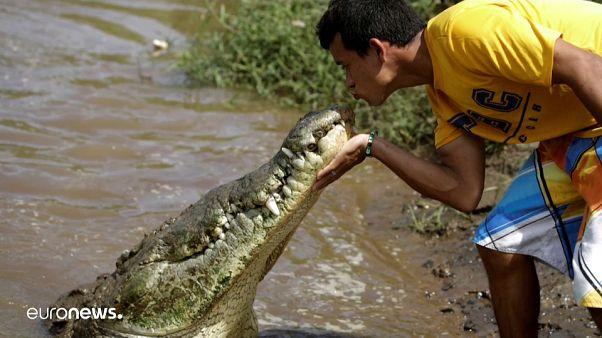 Juan Cerdas bacia un enorme coccodrillo