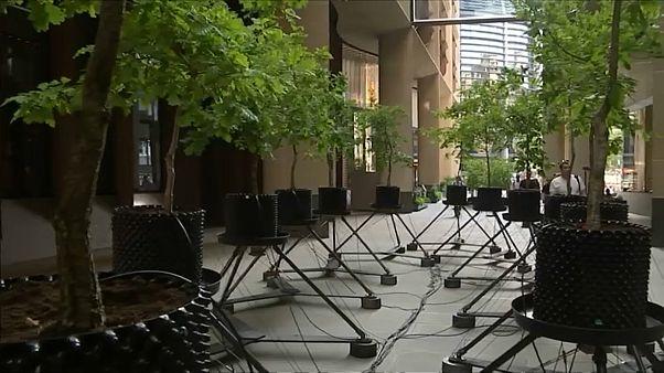 """Wegen """"Klimakollaps"""": Eichen-Kunstprojekt in London"""