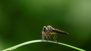 آزمایش موفق در چین؛ پشهها در دو جزیره تقریبا بهطور کامل نابود شدند