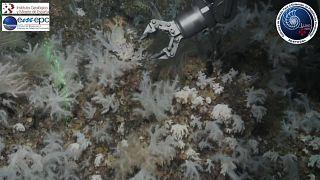 Un tesoro en las profundidades de las Islas Azores