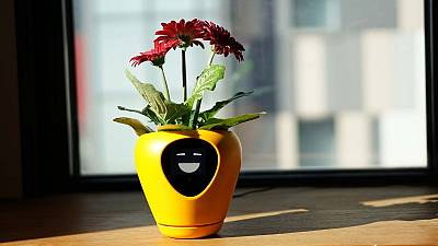 The planter's face conveys a range of emotions