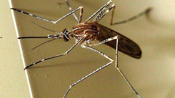 """İstanbul'da 4 kişide """"Batı Nil Virüsü"""" enfeksiyonu tespit edildi"""