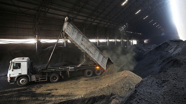 الإمارات العربية: روث الجمال لإنتاج الاسمنت