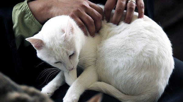 دراسة تكشف أهمية كبيرة للحيوانات الأليفة عند المسنين