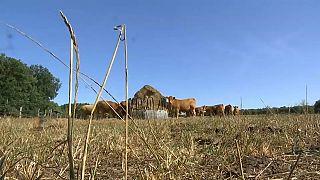 Canicule épisode 2 : l'appel à l'aide des agriculteurs français entendu?