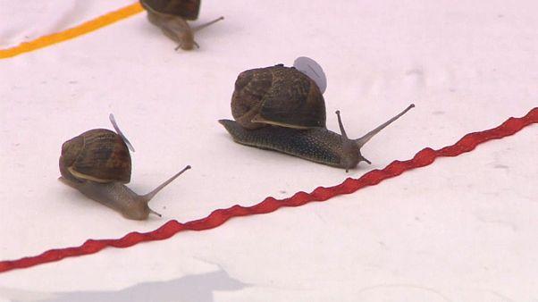 La course à l'escargot, ou l'éloge de la lenteur