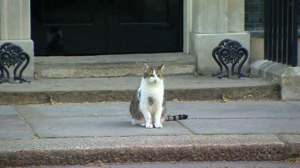 Downing Street 10: Larry bleibt, wer immer kommen mag