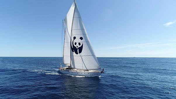 Αποστολή στη Ζάκυνθο με το WWF: «Όχι στις εξορύξεις πετρελαίου στο Ιόνιο »