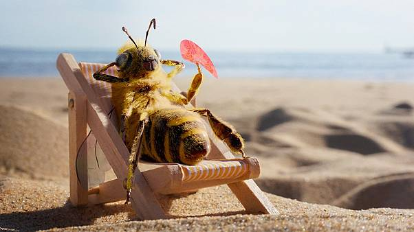 This insect influencer is saving the bees