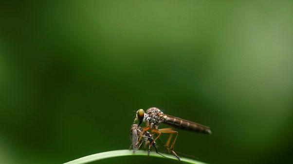 Sivrisinekler neden bazı insanları daha çok ısırıyor?