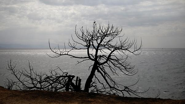 A burnt tree is seen at the seaside following a wildfire in the village of Mati, July 24, 2018