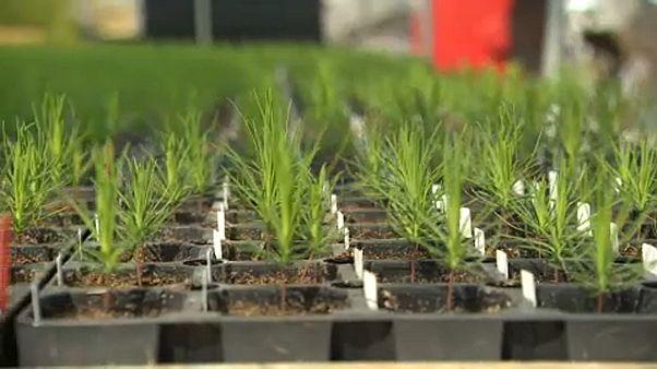 In Finladia si piantano dei super alberi per combattere il cambiamento climatico
