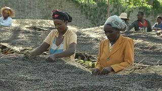 Uluslararası Kahve Günü: Piyasa değeri düşerken bir fincan kahvenin fiyatı neden bu kadar yüksek?