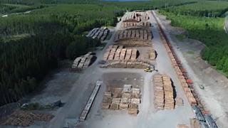 """Breves de Bruxelas"": Finlândia aposta na floresta contra aquecimento"