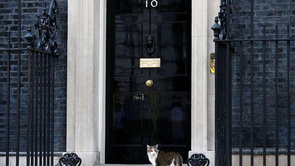 Boris Johnson'ın hükümetinde kimler var? Johnson kardeşine hangi görevi verdi?