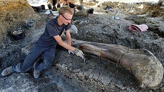 کشف استخوان ۴۰۰ کیلوگرمی یک دایناسور در فرانسه