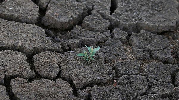 Elpusztítja a termést a szárazság Lengyelországban