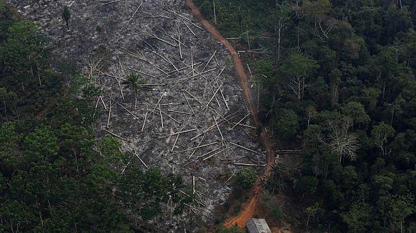 La Amazonía se destruye a tres campos de fútbol por minuto
