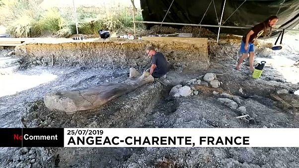 العثور على أطول عظمة تعود لأحد أنواع الديناصوارت في فرنسا