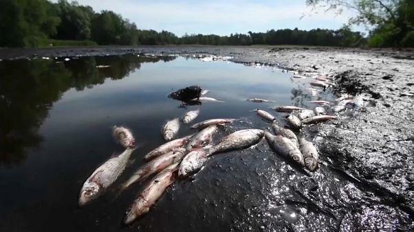 Germania: in Bassa Sassonia si essiccano laghi e si riducono i livelli dei fiumi