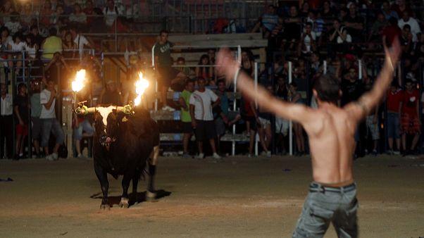 Toro embolado en Amposta, Cataluña