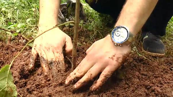 В Эфиопии высадили 350 миллионов деревьев за день