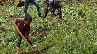 Etiópia planta 353 milhões de árvores para acautelar o futuro