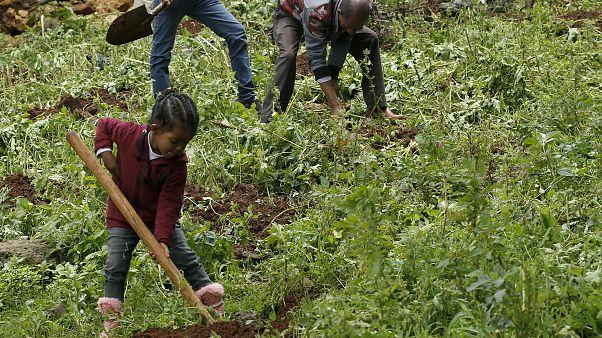 L'Éthiopie plante 350 millions d'arbres pour lutter contre le réchauffement climatique