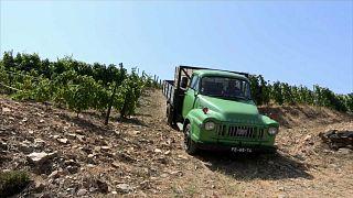 Portogallo: tornano di moda i ruggenti pick up Bedford