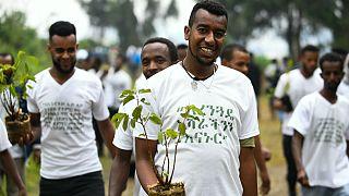 جنگل کاری در اتیوپی؛ کاشت بیش از ۳۵۰ میلیون نهال در ۱۲ ساعت