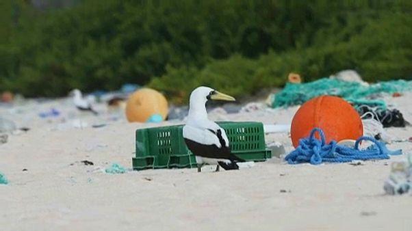 Lixo chega ao paraíso