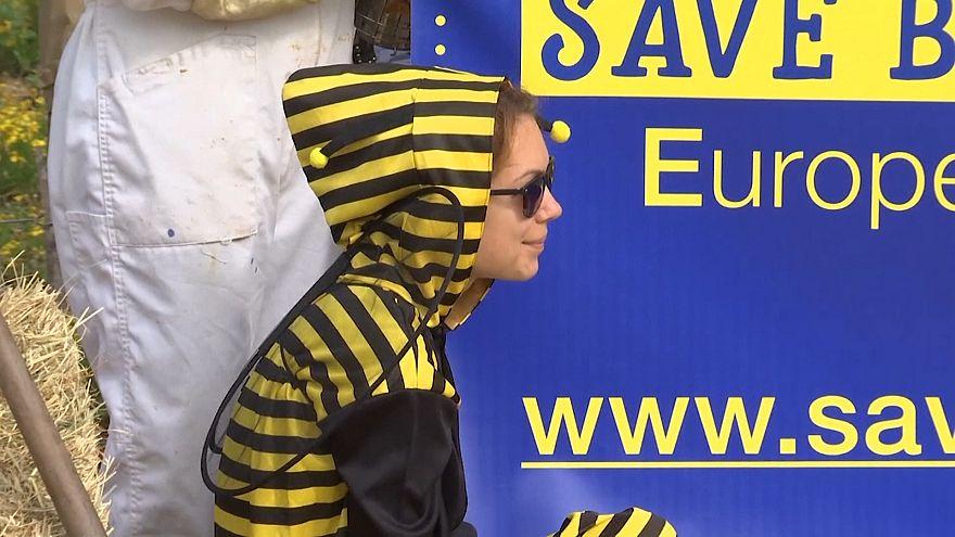 بروکسل؛ اعتراض به استفاده از سموم دفع آفاتی که زنبورهای عسل را میکشد