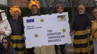 No Comment of the week: abejas, globos aerostáticos y canastas imposibles