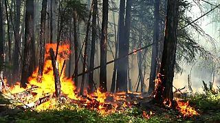 Борьба с огнем: первые результаты