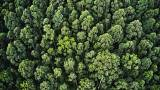 Ethiopia breaks world record by planting 350 million trees in one day